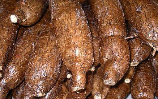 manioc-2