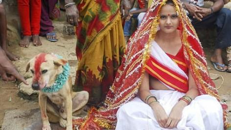 mariage-chien
